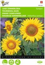 Zonnebloem Sunspot - Helianthus annuus - set van 7 stuks