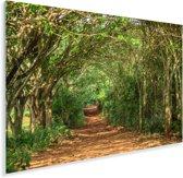 Buiging van bomen bij landbouwgrond Viñales in Cuba Plexiglas 60x40 cm - Foto print op Glas (Plexiglas wanddecoratie)