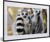 Foto in lijst - Twee schattige Ringstaartmaki's in de bomen fotolijst zwart met witte passe-partout 60x40 cm - Poster in lijst (Wanddecoratie woonkamer / slaapkamer)