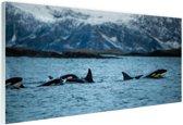 Groep orkas Glas 180x120 cm - Foto print op Glas (Plexiglas wanddecoratie) XXL / Groot formaat!