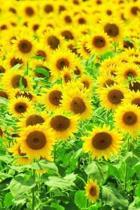 Sunflowers Notebook
