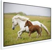 Een veulen draaft met haar moeder Plexiglas 180x120 cm - Foto print op Glas (Plexiglas wanddecoratie) XXL / Groot formaat!