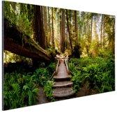 Trap van gevallen bomen in jungle Aluminium 120x80 cm - Foto print op Aluminium (metaal wanddecoratie)