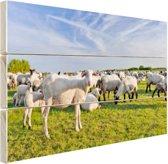 Nederlandse schaapskudde Hout 30x20 cm - klein - Foto print op Hout (Wanddecoratie)