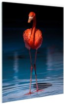 Flamingo donkere achtergrond Glas 60x90 cm - Foto print op Glas (Plexiglas wanddecoratie)