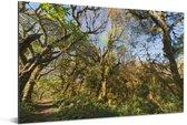 De jungle in het nationaal park Calilegua met helderblauwe lucht in Argentinië Aluminium 180x120 cm - Foto print op Aluminium (metaal wanddecoratie) XXL / Groot formaat!