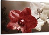 Canvas schilderij Orchidee | Bruin, Wit, Grijs | 140x90cm 1Luik