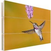 Een calliope kolibrie op een gele achtergrond Vurenhout met planken 90x60 cm - Foto print op Hout (Wanddecoratie)