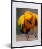 Foto in lijst - Een portret van een kleurrijke zonparkiet fotolijst zwart met witte passe-partout klein 30x40 cm - Poster in lijst (Wanddecoratie woonkamer / slaapkamer)