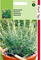 Rozemarijn - Rosmarinus officinalis - set van 7 stuks