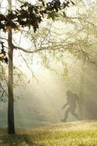 Finding Bigfoot and Other Stories
