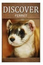 Ferret - Discover