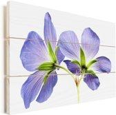 Paarse geranium bloemen close up Vurenhout met planken 120x80 cm - Foto print op Hout (Wanddecoratie)
