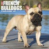 Franse Bulldog Kalender 2020
