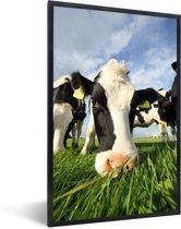 Foto in lijst - Close up van een grazende Friese koe fotolijst zwart 40x60 cm - Poster in lijst (Wanddecoratie woonkamer / slaapkamer)