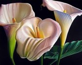 Artibalta Diamond painting kit Beautiful Callas AZ-1361 50 x 40 cm