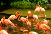 Papermoon Pink Flamingos Vlies Fotobehang 200x149cm 4-Banen