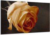 Glasschilderij Roos | Geel, Wit, Zwart | 120x70cm 1Luik | Foto print op Glas |  F002483