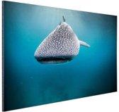 Walvishaai Aluminium 90x60 cm - Foto print op Aluminium (metaal wanddecoratie)