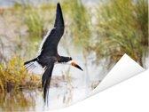 Zwarte Schuimspaan tijdens de vlucht tegen een achtergrond van water en gras Poster 40x30 cm - klein - Foto print op Poster (wanddecoratie woonkamer / slaapkamer)