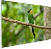 Een omhoog kijkende papegaai-breedbek Plexiglas 180x120 cm - Foto print op Glas (Plexiglas wanddecoratie) XXL / Groot formaat!