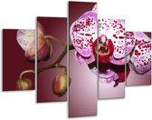 Glasschilderij Orchidee | Paars, Wit | 100x70cm 5Luik | Foto print op Glas |  F002624