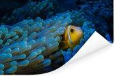 Blauw anemoon rondom een Clown vis Poster 180x120 cm - Foto print op Poster (wanddecoratie woonkamer / slaapkamer) XXL / Groot formaat!