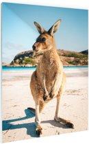 Een kangoeroe op het strand Glas 40x60 cm - Foto print op Glas (Plexiglas wanddecoratie)