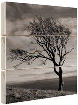 Winterfoto beukenboom zwart-wit Hout 50x50 cm - Foto print op Hout (Wanddecoratie)
