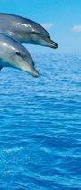 Fotobehang - Three Dolphins - Deurposter - 200 x 86 cm - Blauw