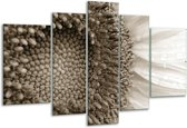 Glas schilderij Bloem | Sepia | 170x100cm 5Luik | Foto print op Glas |  F006662