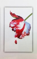 Boek cover The Twilight Saga boxset (1-5) van S. Meyer (Paperback)