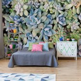 Fotobehang Succulent Plants Texture | V4 - 254cm x 184cm | 130gr/m2 Vlies