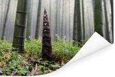 Groei van een bamboescheut in het Chinese bos Poster 120x80 cm - Foto print op Poster (wanddecoratie woonkamer / slaapkamer)