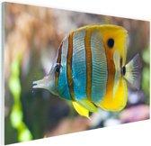 Gestreepte vis Glas 180x120 cm - Foto print op Glas (Plexiglas wanddecoratie) XXL / Groot formaat!