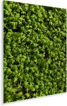 Afbeelding volledig gevuld met tuinkers Plexiglas 30x40 cm - klein - Foto print op Glas (Plexiglas wanddecoratie)