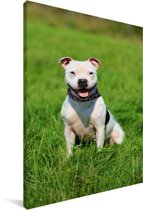 Glimlachende Staffordshire Bull Terrier Canvas 120x180 cm - Foto print op Canvas schilderij (Wanddecoratie woonkamer / slaapkamer) / Huisdieren Canvas Schilderijen XXL / Groot formaat!