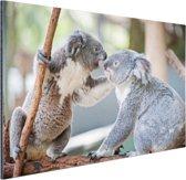 Twee koalaberen op tak Aluminium 180x120 cm - Foto print op Aluminium (metaal wanddecoratie) XXL / Groot formaat!