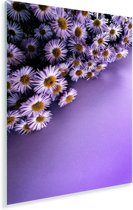 Paarse aster bloemen in de hoek Plexiglas 80x120 cm - Foto print op Glas (Plexiglas wanddecoratie)