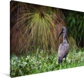 Hadada-ibis bij het meer Naivasha in Afrika Canvas 180x120 cm - Foto print op Canvas schilderij (Wanddecoratie woonkamer / slaapkamer) XXL / Groot formaat!