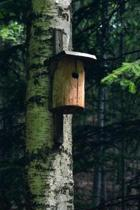 Birdhouse in the Forest Journal: 150 Page Lined Notebook/Diary