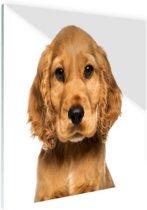 FotoCadeau.nl - Close-up van een puppy Glas 180x120 cm - Foto print op Glas (Plexiglas wanddecoratie)