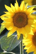 Sunflower Summer Journal: 150 Page Lined Notebook/Diary