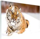 Amur tijger in de sneeuw Glas 60x40 cm - Foto print op Glas (Plexiglas wanddecoratie)