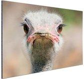 Struisvogel Portret van voren Aluminium 180x120 cm - Foto print op Aluminium (metaal wanddecoratie) XXL / Groot formaat!