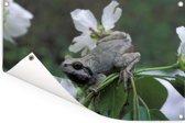Japanse boomkikker op een bloem in het Nationaal park Bikin in Rusland Tuinposter 60x40 cm - klein - Tuindoek / Buitencanvas / Schilderijen voor buiten (tuin decoratie)