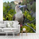 Fotobehang vinyl - Roodpootgent bovenin een struik breedte 300 cm x hoogte 300 cm - Foto print op behang (in 7 formaten beschikbaar)