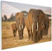 Olifanten familie Glas 90x60 cm - Foto print op Glas (Plexiglas wanddecoratie)