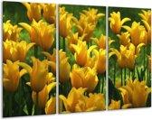 Glasschilderij Tulpen | Geel, Groen | 120x80cm 3Luik | Foto print op Glas |  F001272