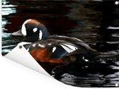 Kleurrijke harlekijneend op het water Tuinposter 80x60 cm - Tuindoek / Buitencanvas / Schilderijen voor buiten (tuin decoratie)